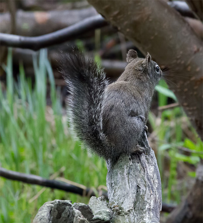 K5 squirrel 010955